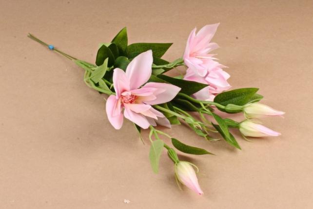 Клематис Светло-розовый (3 шт в уп) SUN500