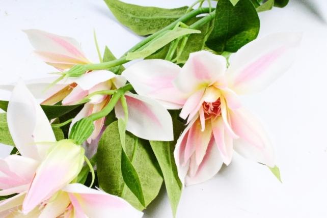 Клематис ветка бело-розовый SUN508