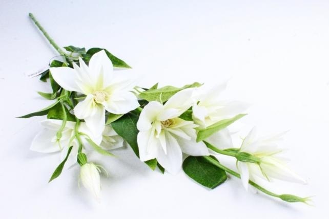Клематис ветка  бело-салатовый SUN508