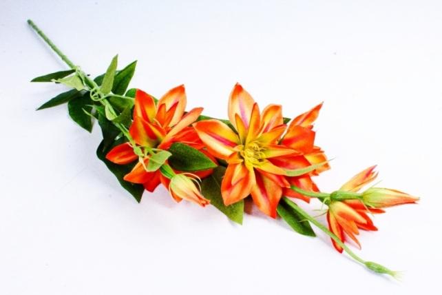 Клематис ветка  оранжевый SUN508