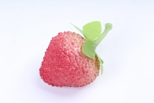 Клубника сахарная  (10шт в уп)