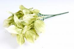 Колеус  оливковый
