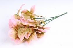 Колеус розовый
