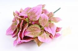 Колеус ярко-розовый