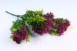 Крушина мелкая пурпурная