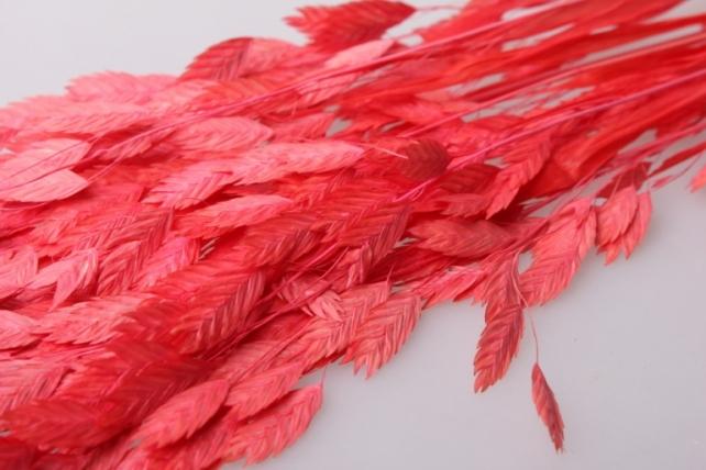 кукушкины слезки крупные кукушкины слезки крупные сухоцветы - красный 7698
