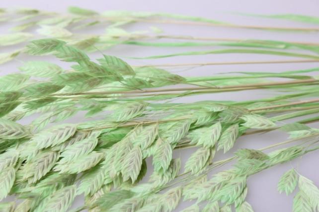 кукушкины слезки крупные кукушкины слезки крупные сухоцветы - салатовый 7698
