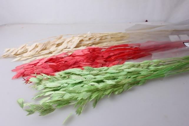 кукушкины слезки крупные кукушкины слезки крупные сухоцветы - шампань 7698