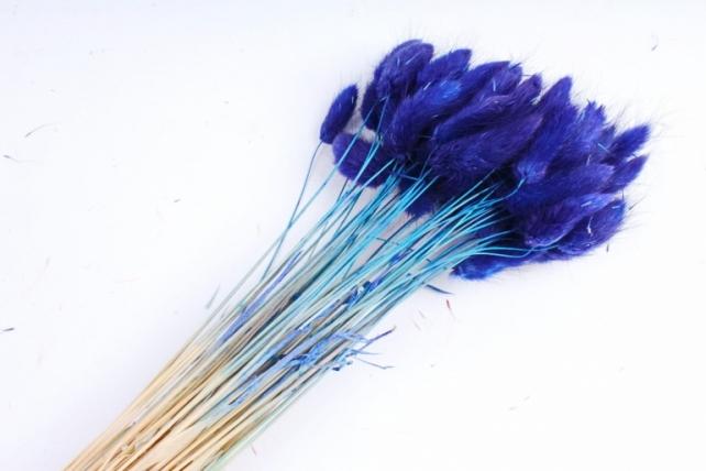 Лагурус Синий 65 см