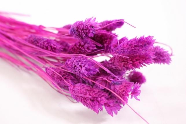 лагурус темно-розовый - 50гр (н)
