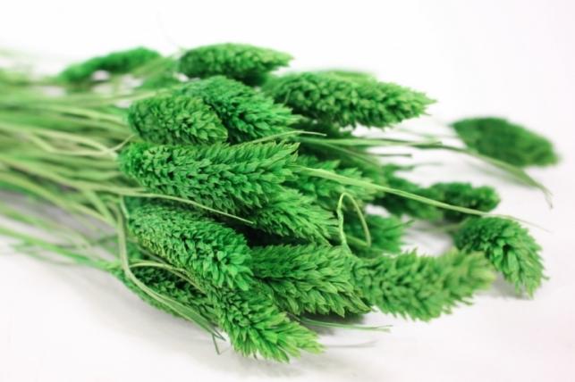 лагурус зеленый - 50гр (н)