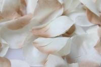 лепестки роз лепестки роз (микс цветов белый, кремовый) в пакете 7910