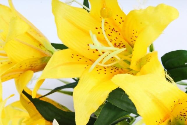 Лилии  жёлтые