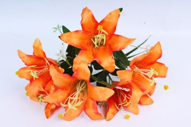Лилии оранжевые