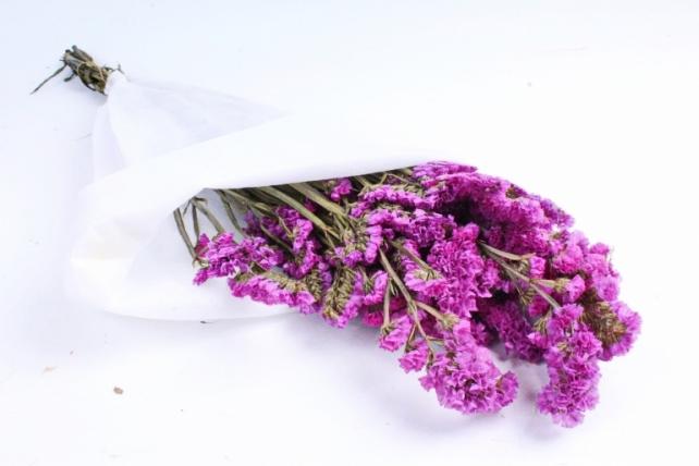 Лимониум Пурпурный