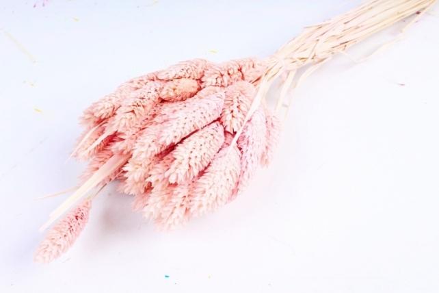Лисохвост Розовый