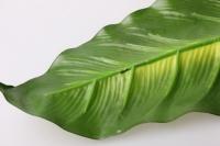 лист дифенбахии 80см - цветы искусственные