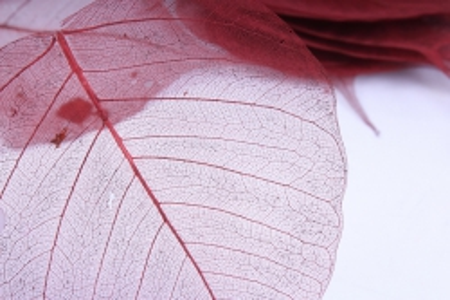 листья скелетизированные (50шт) коричневый