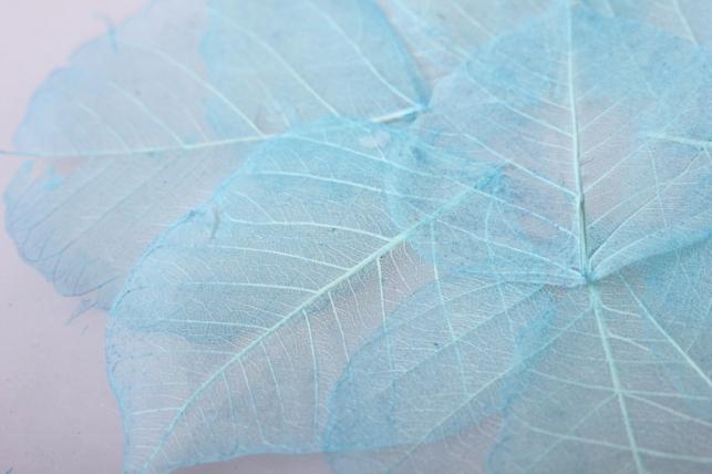 листья скелетизированные 9х9см (50шт) голубой