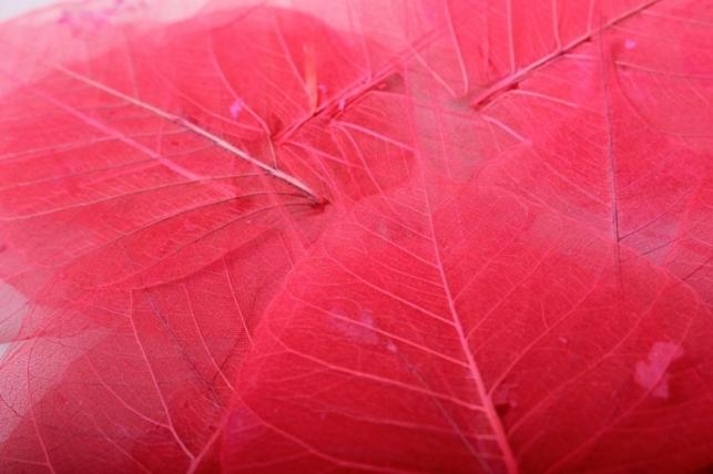 листья скелетизированные 9х9см (50шт) красный