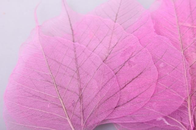 листья скелетизированные 9х9см (50шт) сиреневый