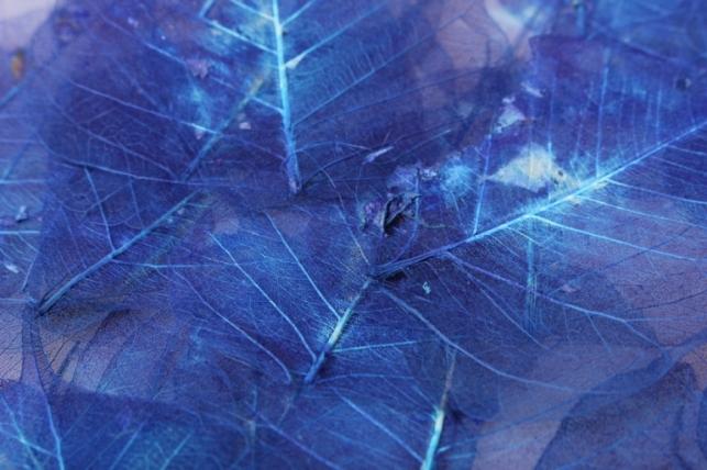 листья скелетизированные 9х9см (50шт) темно-синий