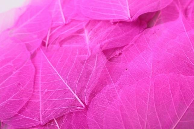 листья скелетизированные 9х9см (50шт) ярко-розовый