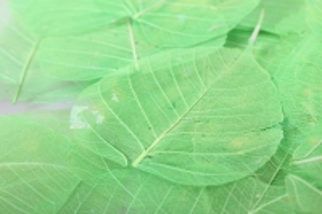 листья скелетизированные 9х9см (50шт) зеленое яблоко