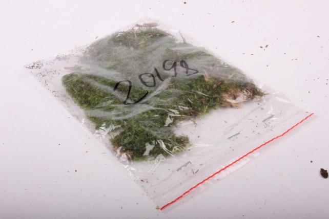 Мох зеленый в пакете А