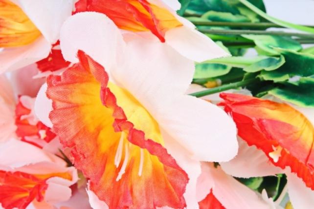 Нарциссы  красно-белые