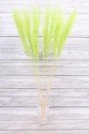 Пампасная трава (10шт), салатовый 8537Н