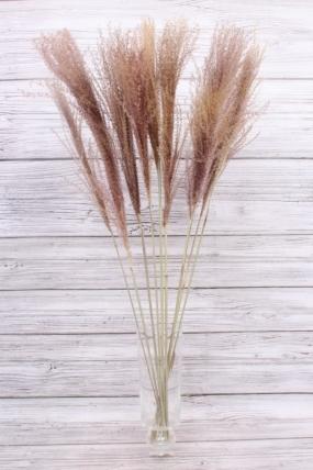 Пампасная трава (10шт), св.коричневый 8568Н