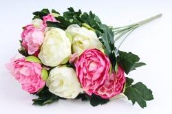 Пионы бело-розовые