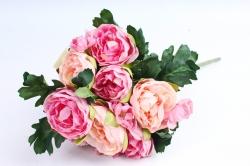 Пионы персиково-розовые