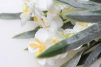 примула белая gaр85 6743 искусственные растения