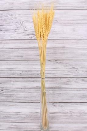 Пшеница, цв. жёлтый 0753Н. 74см.