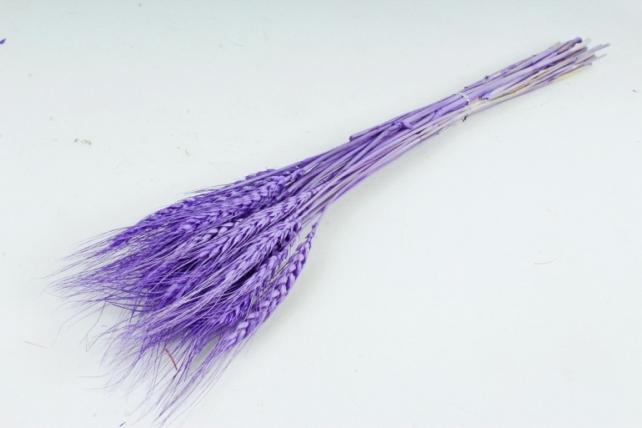 Пшеница сухоцвет (Н) цвет сиреневый 2500