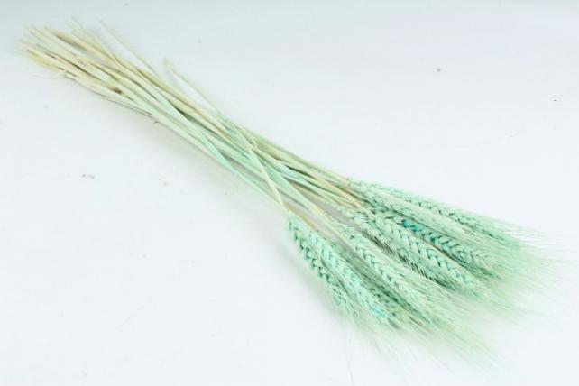 Пшеница сухоцвет (Н) цвет тиффани 2487