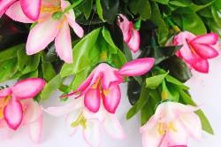 Рододендрон бело-розовый