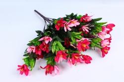 Рододендрон розово-малиновый