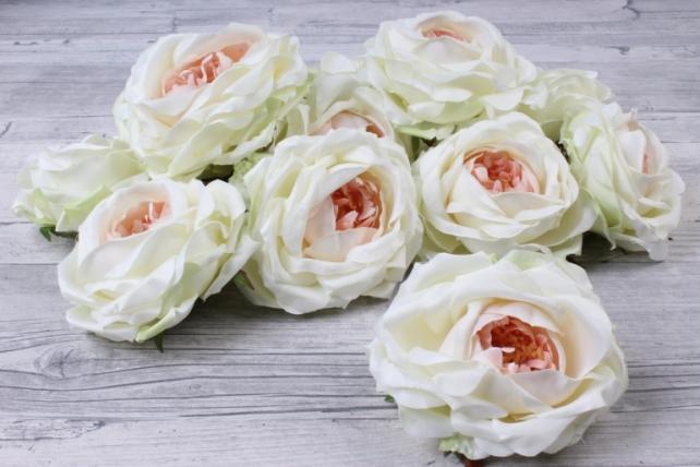 Роза французская ( 12 шт в уп) кремовая  SUN462