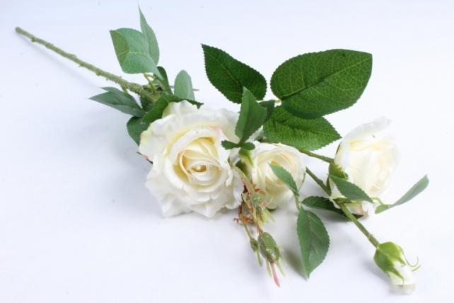 Роза на ветке шампань SUN130