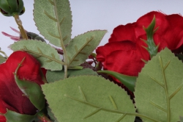 роза на ветке  красная sun130