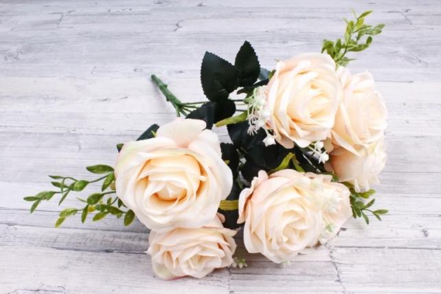 Роза обыкновенная  кремовая