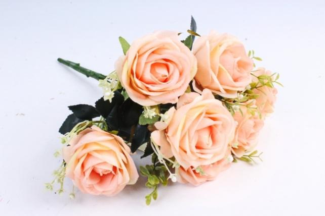 Роза обыкновенная персиковая