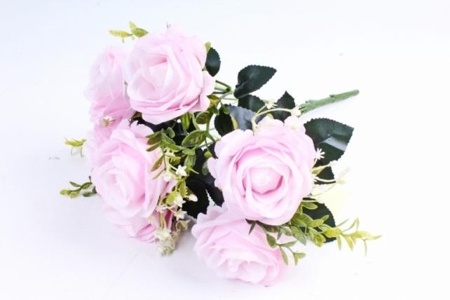 Роза обыкновенная  зефирная