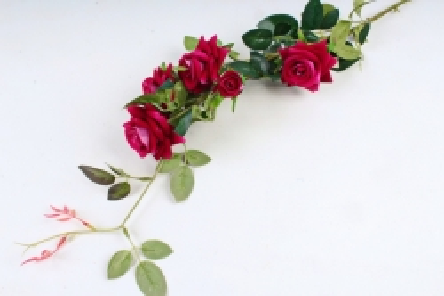 Роза с шипами малиновая