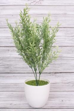 Розмарин бело-салатовый 43 см