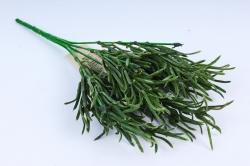 Розмарин зелёный KWLA084