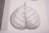 Салфетка декупажная 33*33 Скелетированные листья серые 13306590